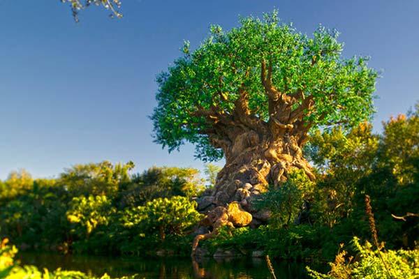tree-of-life-animal-kingdom-on-side