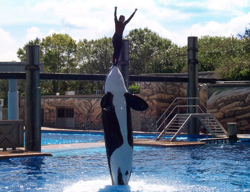 Incidents At Seaworld Parks: SeaWorld Parks Orlando